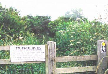 Railtrack overgrown
